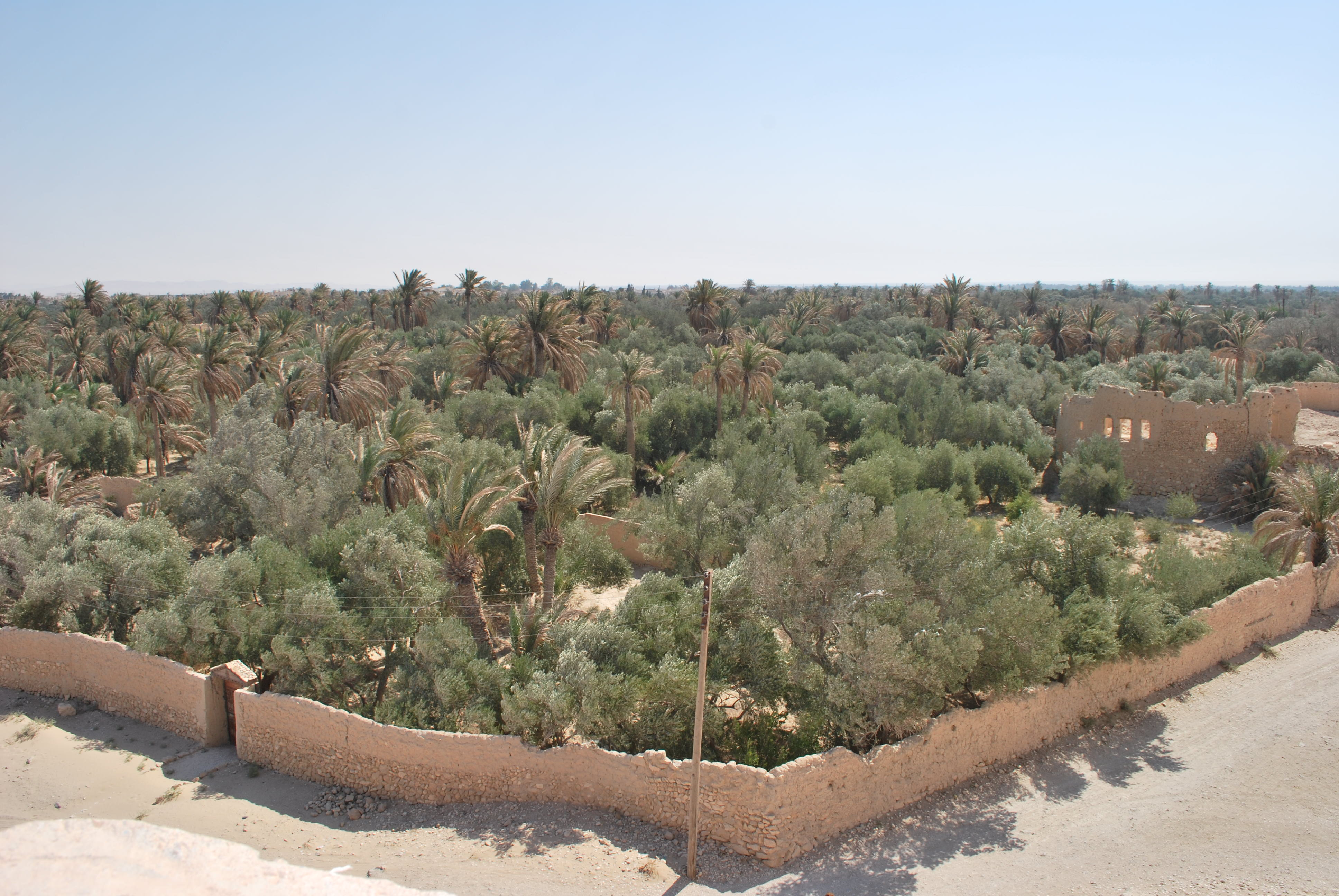 syrie palmyre