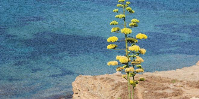 Sciences & Avenir / De nouveaux lingots d'orichalque trouvés au large de la Sicile