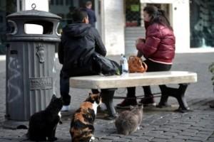 Italie: bisbilles à Rome sur la présence de chats au milieu de ruines antiques