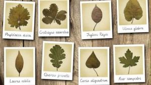 Les plantes perdent leur latin, pas leur attrait