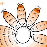 Deux demi-marguerites pour ne pas décliner - Tableau synoptique simplifié des cinq déclinaisons